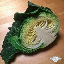 May Savoy Cabbage 'Bonner Advent' (Brassica oleracea convar. capitata var. sabauda L.) - bulk quantity (5g / approx. 1000 seeds) #3