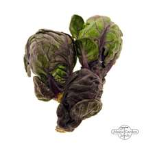 Purple Brussels Sprouts 'Red Ball' (Brassica oleracea var.gemmifera) #1