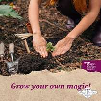 Caffeine Producing Plants - Seed kit gift box #6