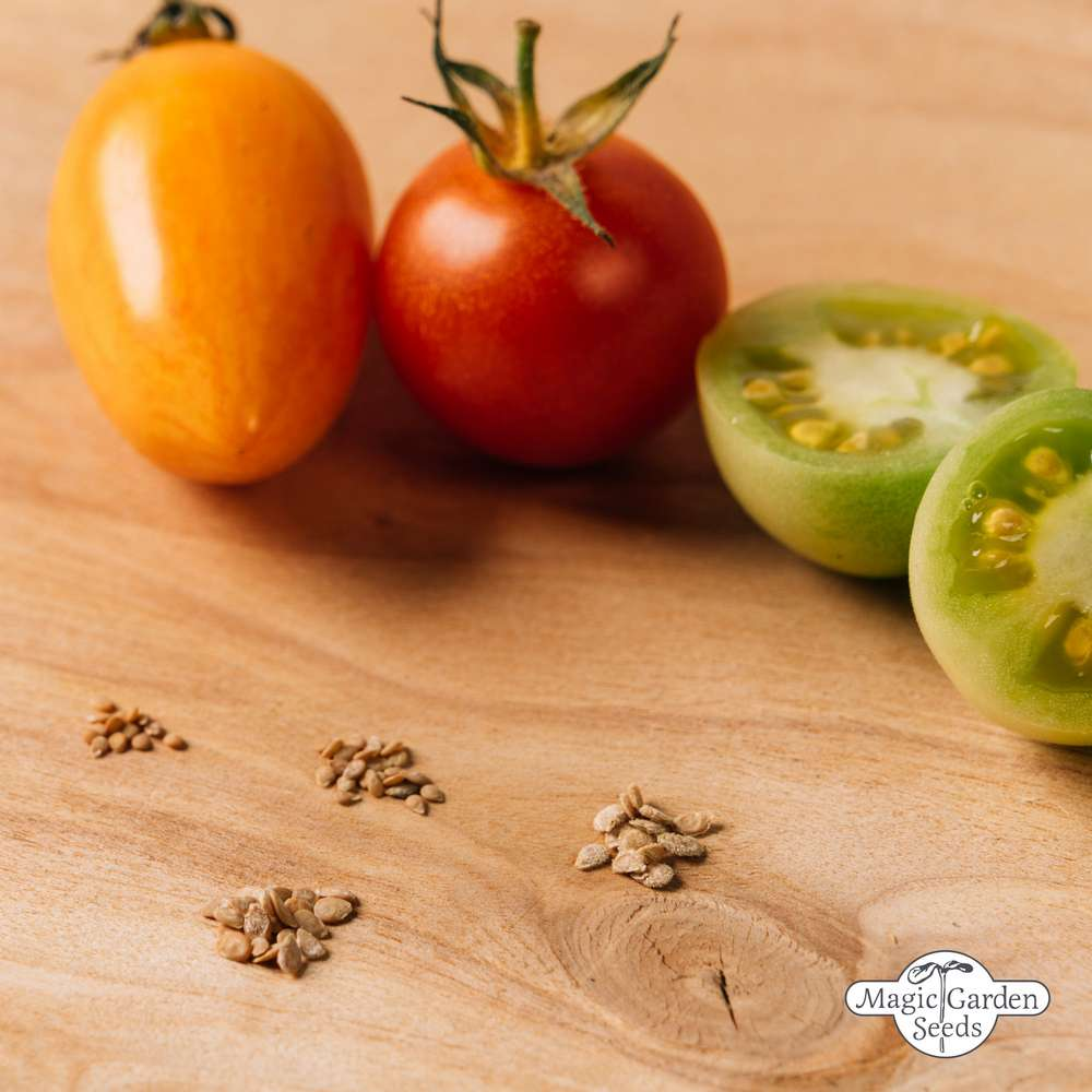Seed gift box: 'Old colourful tomatoes'