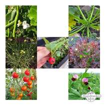 Balcony Veggies - Seed kit gift box #5
