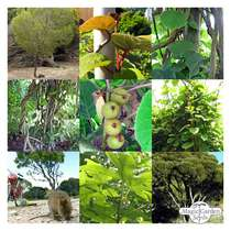 Australian Plants - Seed kit gift box #3