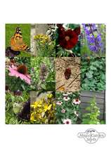 Butterfly Garden - Seed kit gift box #5
