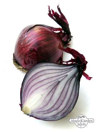 Red Onion 'Red Brunswick' (Allium Cepa)