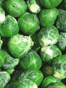 Brussels sprouts 'Evesham Special' (Brassica oleracea)