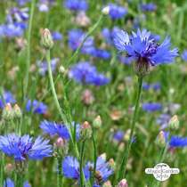 Wildflower Mixture (10g suitable for approx. 5m² area) organic #12