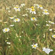 Wildflower Mixture (10g suitable for approx. 5m² area) organic #2