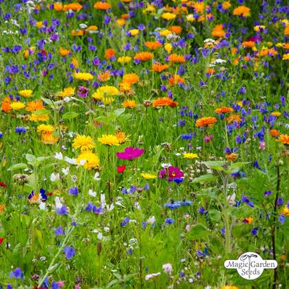 Wildflower mixture - bulk quantity (100g suitable for approx. 50m² area)
