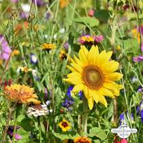 Insect-friendly Flower Mixture conventional - bulk quantity (100g suitable for approx. 50 m² area) #0