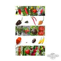 Miscellaneous Chilli Peppers - Seed kit #2
