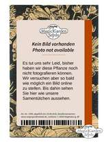 Miscellaneous Chilli Peppers - Seed kit #6