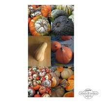 Pumpkins, Gourds & Squashes - seed kit #2