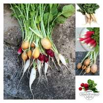Colourful Radishes All Year Round - Seed kit #2