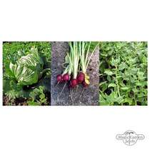 New Zealand Spinach, Lettuce & Radishes - Seed kit #2